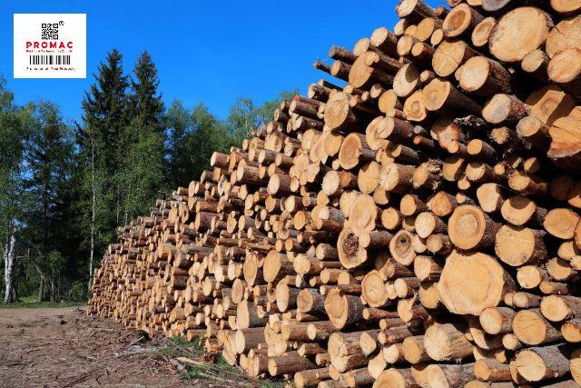 gỗ trong quy trình sản xuất  giấy